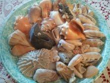Florida Shells