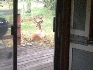 backyard buck